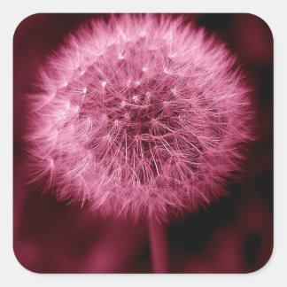 Pink Dandelion Square Sticker