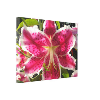 Pink Day lilies Gallery Wrap Canvas