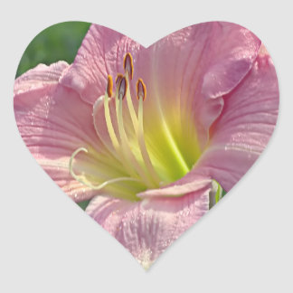 Pink Day Lily Heart Sticker