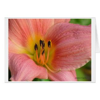 Pink Daylily Stationery Note Card