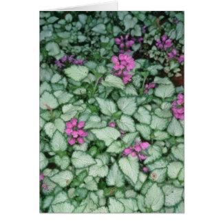 Pink Dead Nettle, (Lamium Maculatum) flowers Card