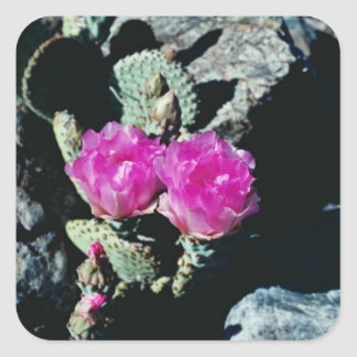 Pink Death Valley - Prickly Pear Cactus flowers Stickers