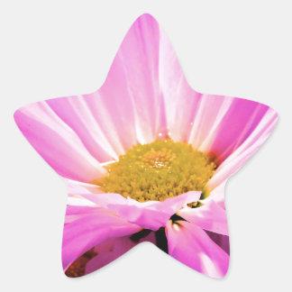 Pink Delight Star Sticker
