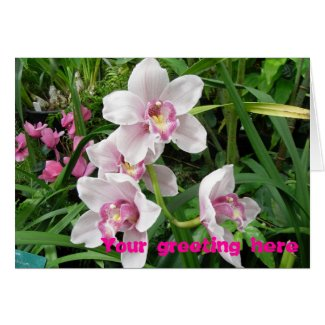 Pink Dendrobian Orchids card