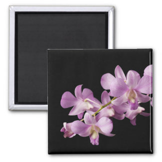 Pink Dendrobium Orchid Flower on Black - Orchids 2 Inch Square Magnet