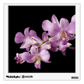 Pink Dendrobium Orchid Flower on Black - Orchids Wall Skin