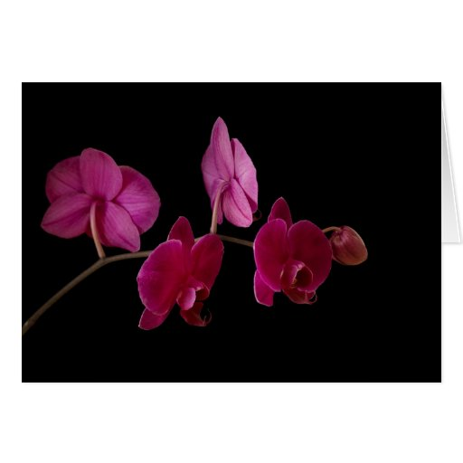 Pink Dendrobium Orchid on Black - Customized Card