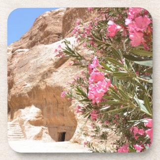 Pink Desert Flowers Beverage Coasters