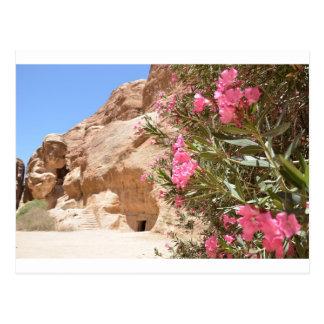 Pink Desert Flowers Postcard