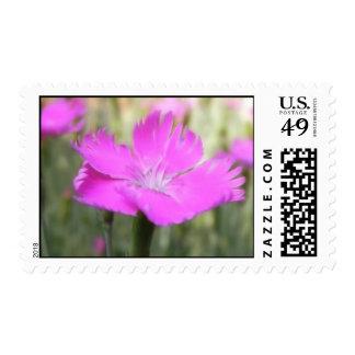 Pink Dianthus Bloom Postage Stamps