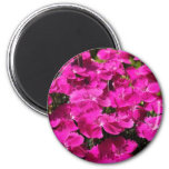 Pink Dianthus Flowers 2 Inch Round Magnet