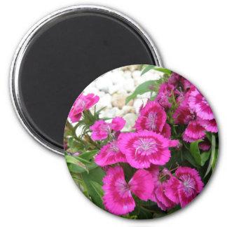 Pink Dianthus/Sweet William Magnet