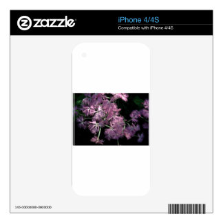 Pink Dianthus Tom Wurl Decal For The iPhone 4S