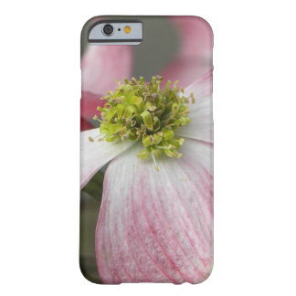 Pink Dogwood Barely There iPhone 6 Case