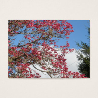 Pink Dogwood Blooms and Sky With Tall Pine Closeup Business Card