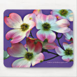 Pink Dogwood Blossoms Mouse Pad