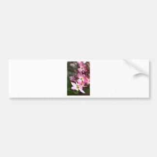 Pink Dogwood Bumper Sticker