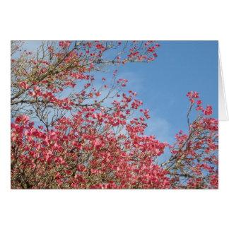 Pink Dogwood Card