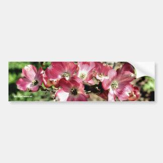 Pink Dogwood Flower Photo Bumper Sticker