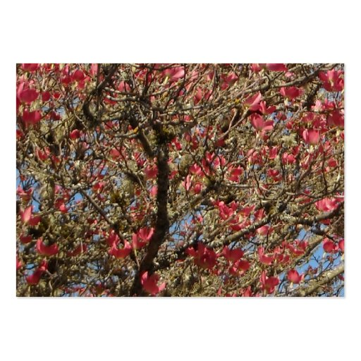 Pink Dogwood Tree and Branch in Bloom Large Business Card