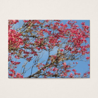 Pink Dogwood Tree in Bloom 5 Business Card
