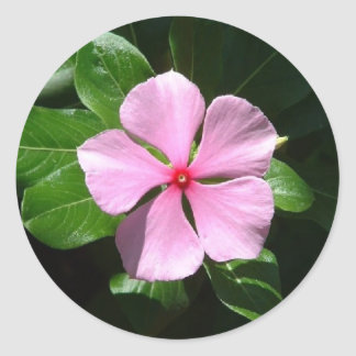 Pink Dot Classic Round Sticker