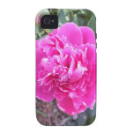 Pink Double Rose iPhone 4 Case