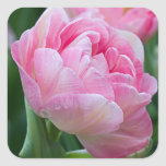 Pink Double Tulips Square Sticker