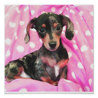 pink doxie poster