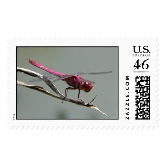 Pink Dragonfly Postage Stamps