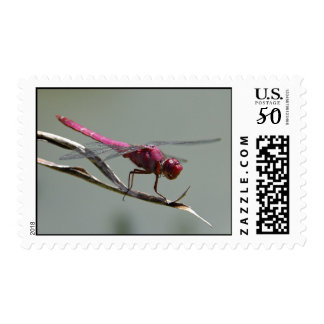 Pink Dragonfly Postage