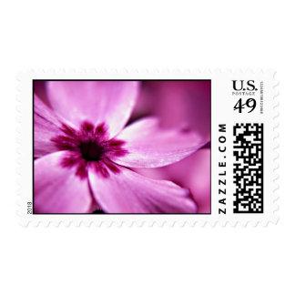 Pink Dwarf Phlox flower postage stamps