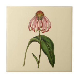 Pink Echinacea Botanical Tan Ceramic Tile