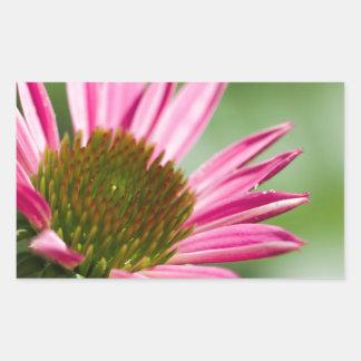 Pink Echinacea Coneflower Blossom Backgrounds Rectangular Sticker