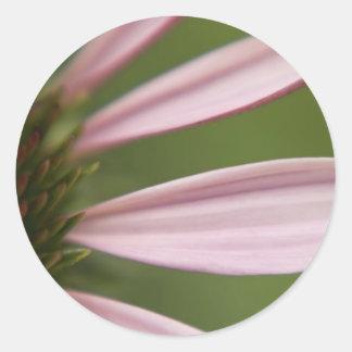Pink Echinacea Coneflower Blossom Macro Classic Round Sticker
