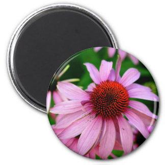 pink echinacea flower magnet