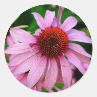pink echinacea flower sticker