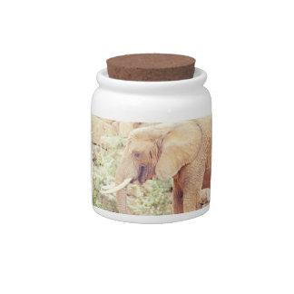 Pink Elephant Photograph Candy Jars