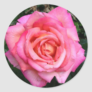 Pink English Garden Rose Floral Stickers Seals