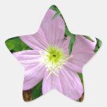 Pink evening primrose wild flower star sticker