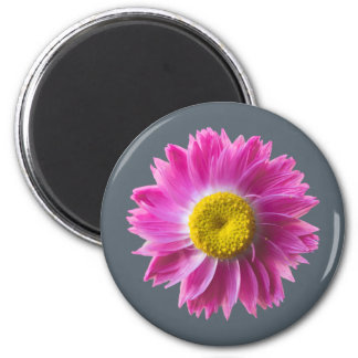 Pink everlasting wildflower magnet
