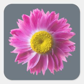 Pink everlasting wildflower sticker