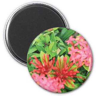 Pink Explosion Magnet
