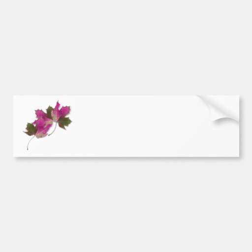 Pink Fall Leaves Bumper Stickers
