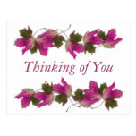 Pink Fall Leaves Postcards