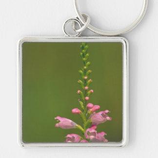 Pink False Dragonhead Flower Keychains