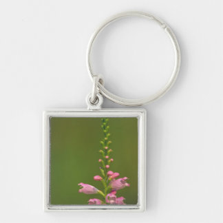 Pink False Dragonhead Flower Key Chains