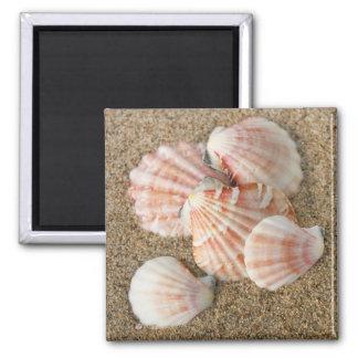 Pink Fan Shells Magnet