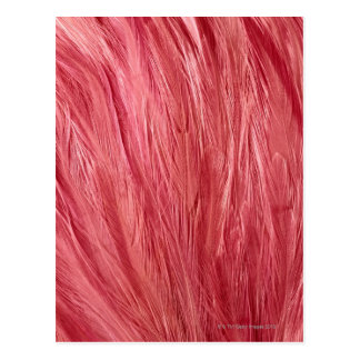 Pink Feathers Postcard