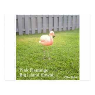 Pink Flamingo - Big Island Hawaii Postcard